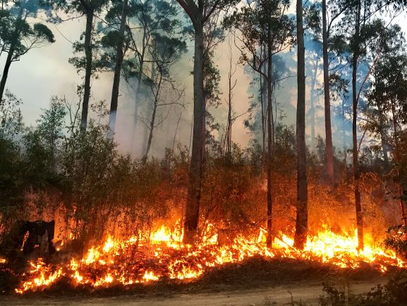 Seven ways to protect your property from wildfire