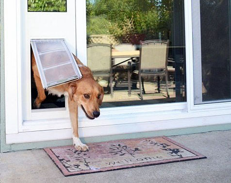 Pet doors might oblige unwelcome guests