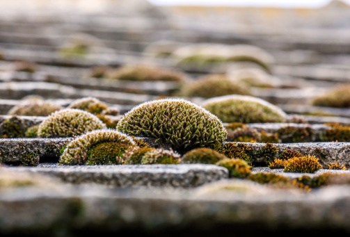 green moss on roof shingles
